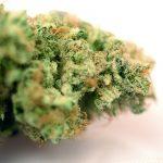 Candy Kush Cannabis Strain Sugarleaf
