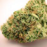 Agent Orange Cannabis Strain Sugarleaf