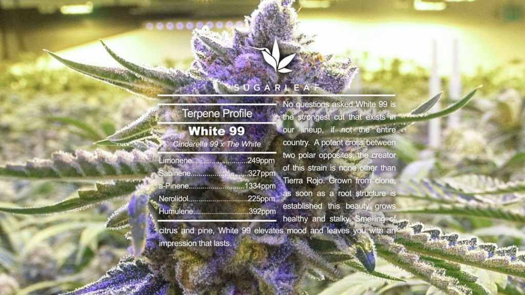 What Is A Hybrid Cannabis Strain?
