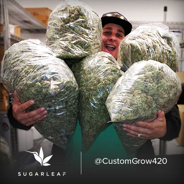 Tour Sugarleaf Farm with @CustomGrow420 & Our Owners!